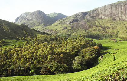 Munnar Private Day Tour